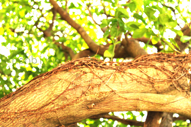 木と葉とツタ.jpg